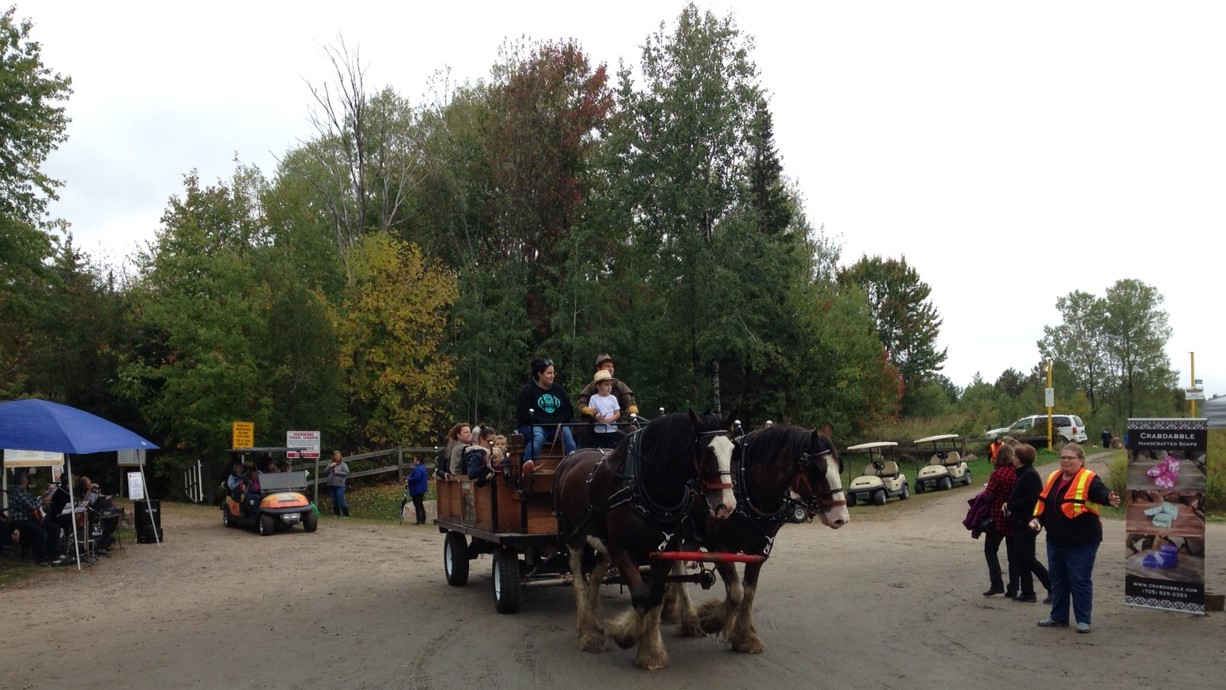 Village Clydesdales offered horse-wagon rides along the trail.