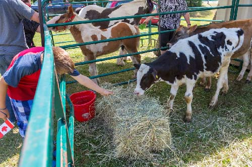 Celebrating Canada Day during FunFest 2019: farm animals